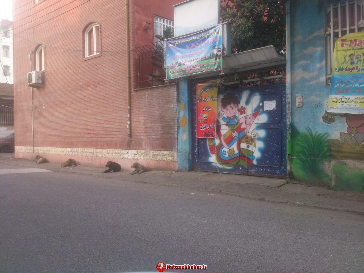 سگ های ولگرد در خیابان