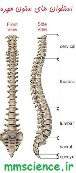 استخوان های ستون مهره