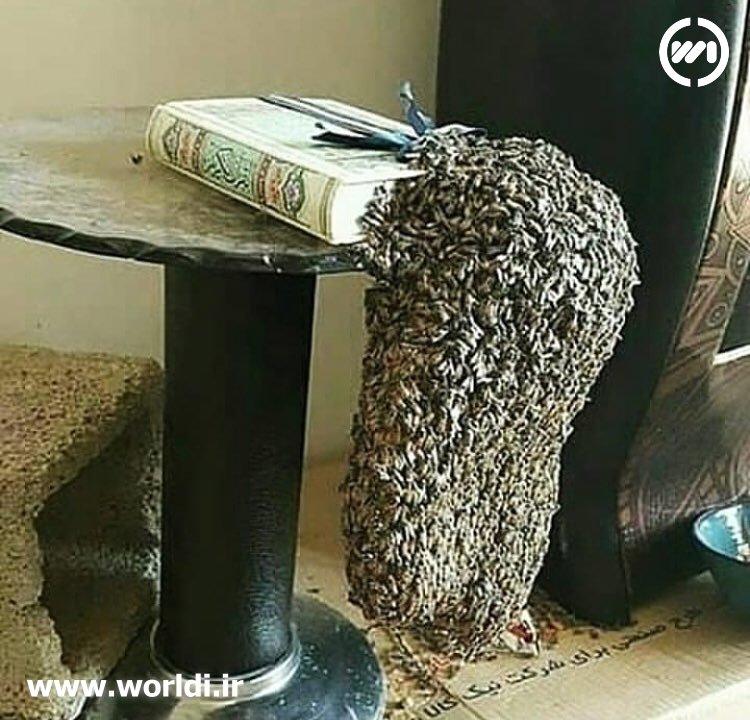 قرآن و زنبور عسل