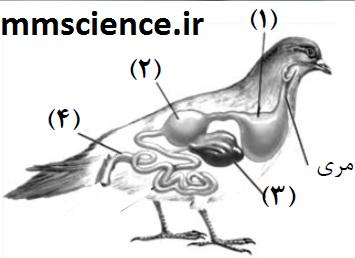 دستگاه گوارش پرندگان زیست دهم