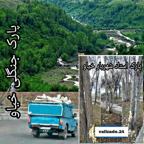 درختان آذربایجان