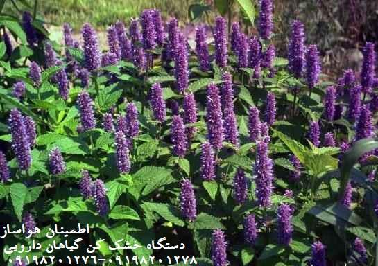 خشک کن گیاهان دارویی و قیمت آن