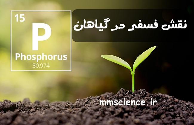 نقش فسفر در گیاهان