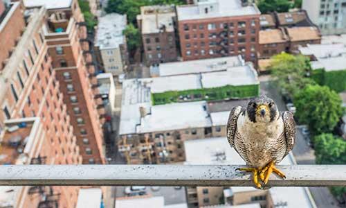برای احیای حیات وحش شهری چه کنیم؟