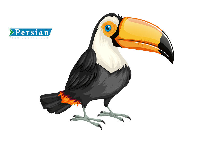 دانلود فایل لایه باز پرنده توکان Toucan