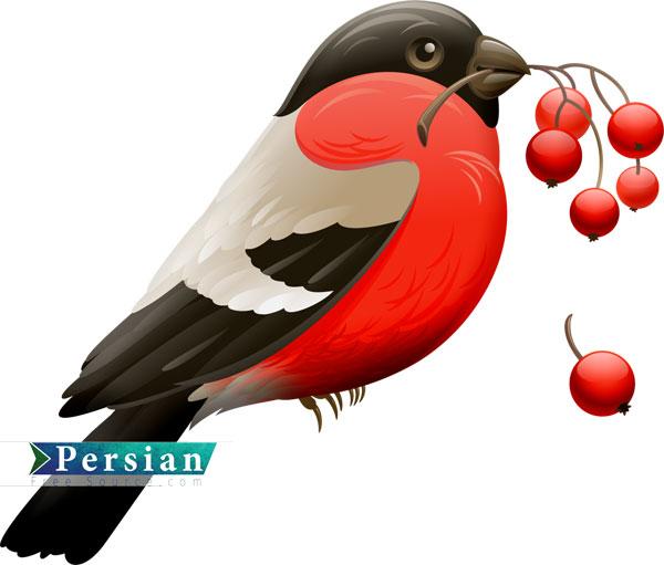 دانلود فایل باکیفیت پرنده سینه سرخ | Red Robin