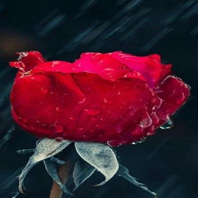 شعر دم ندیده عشق