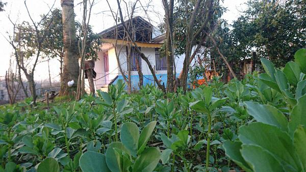 ویلا 300 متری مشاورین املاک خانجانی