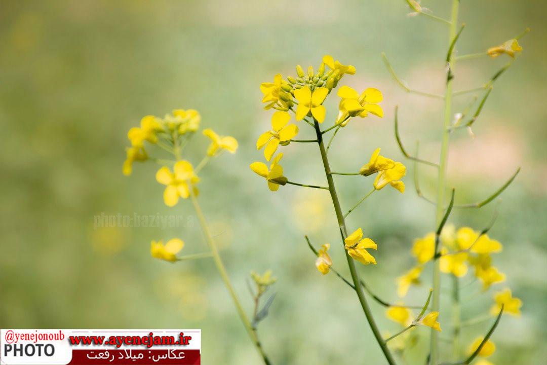 http://s8.picofile.com/file/8354972576/455205039_105332.jpg