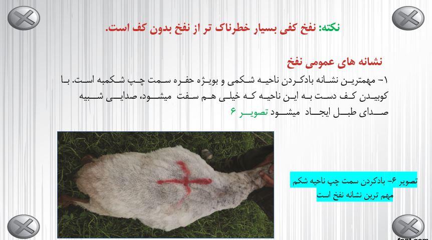 دانلود مقاله نفخ در گوسفندان ppt - انواع نفخ - روش های پیشگیری از نفخ - نفخ کفی - نفخ گازی