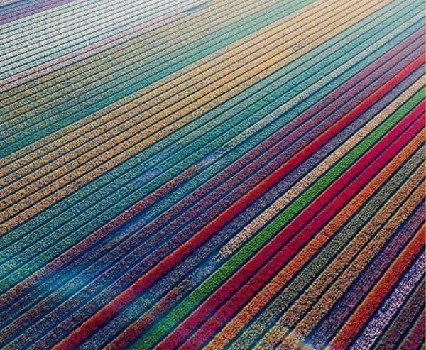 زمین های لاله در هلند