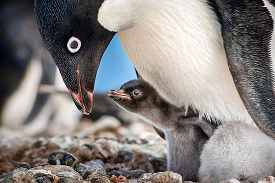 دانلود فیلم پنگوئن ها penguins 2019 کامل