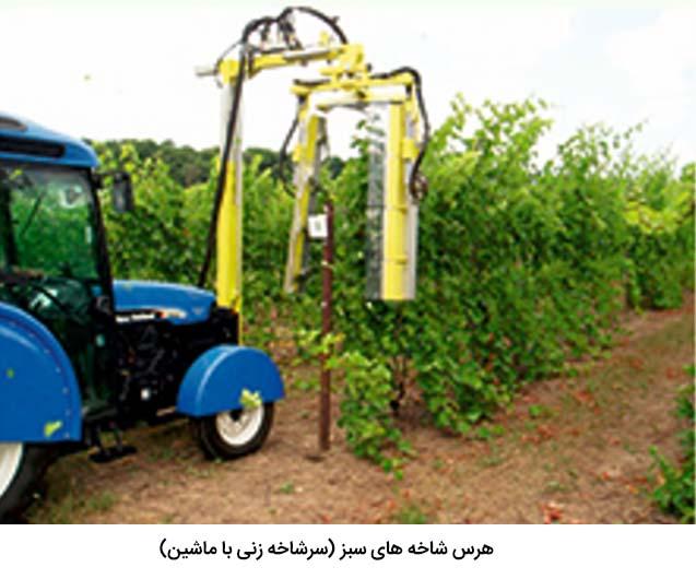 هرس شاخه های سبز انگور با ماشین