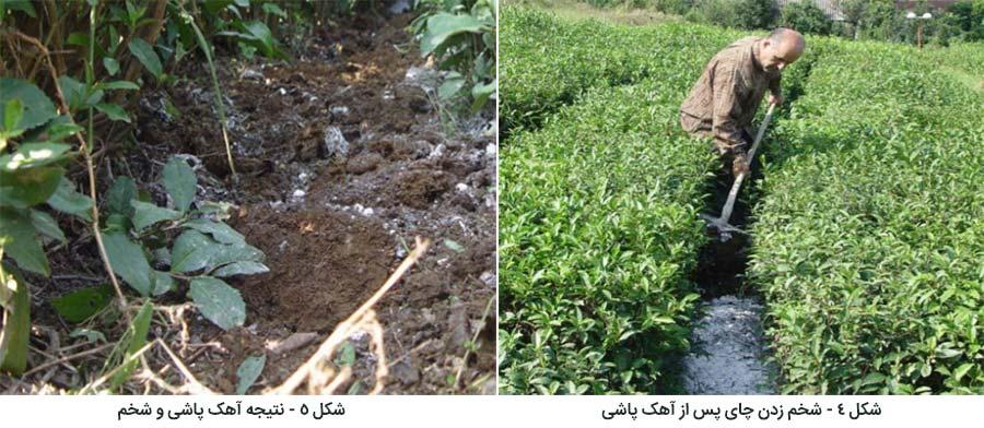 نتایج مصرف آهک در باغ چای