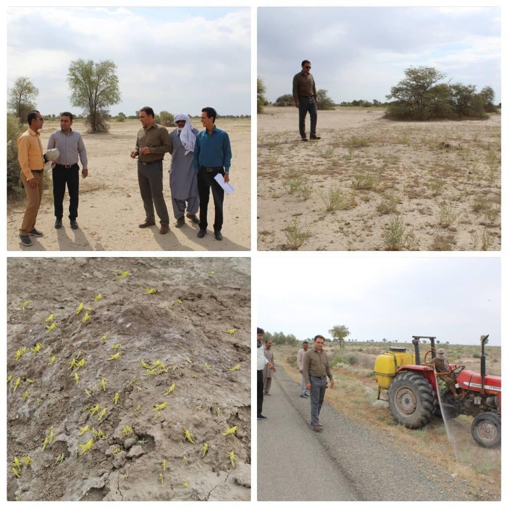 بازدید محمدجعفر جهانگیری از وضعیت مقابله با ملخ صحرایی در قلعه گنج