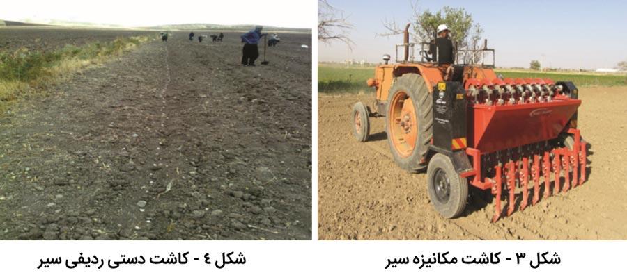 روشهای کاشت و پرورش سیر