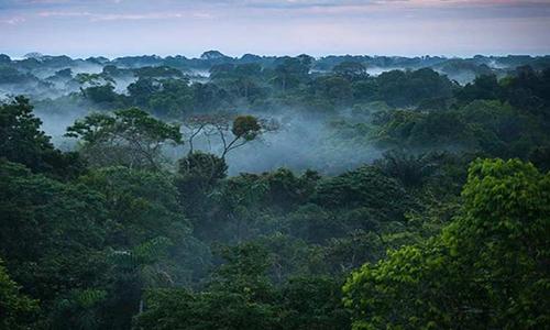 هر دقیقه منطقهای به وسعت یک زمین فوتبال از جنگلهای آمازون تخریب میشود