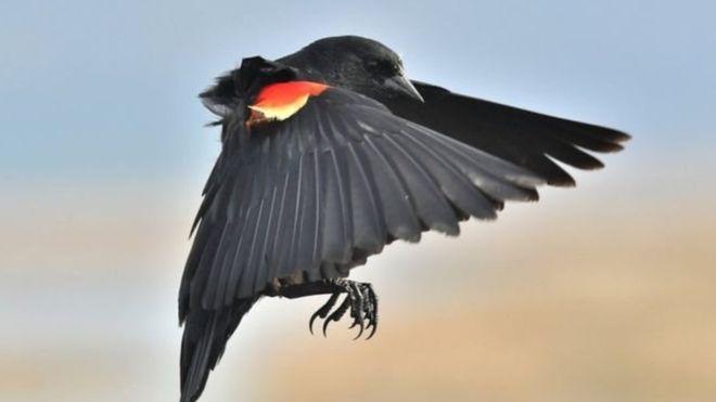 حمله پرندگان به انسان ها